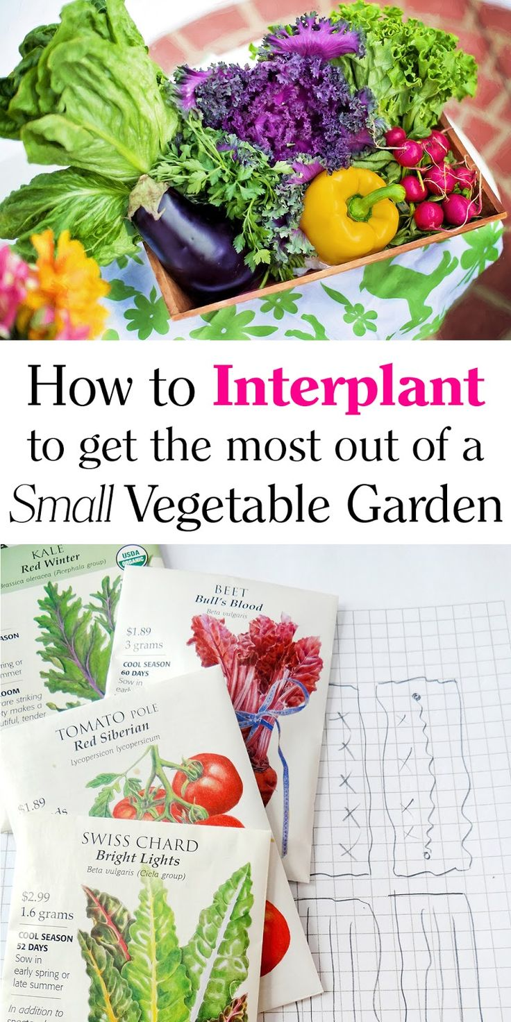 how to grow more vegetable pdf