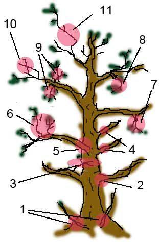 jade bonsai care instructions