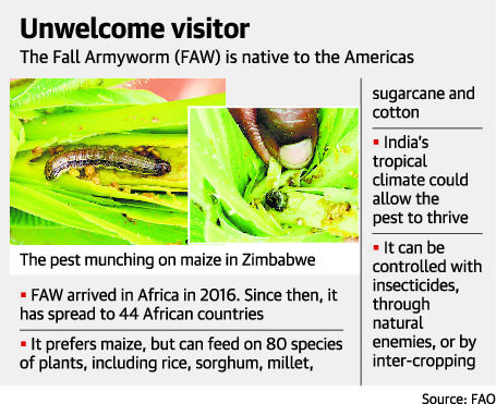 major insect pest of rice pdf